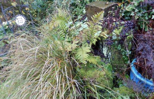 Moss & lichen on the Stumpery